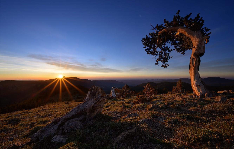 Photo wallpaper tree, dawn, morning, USA, snag, Colorado