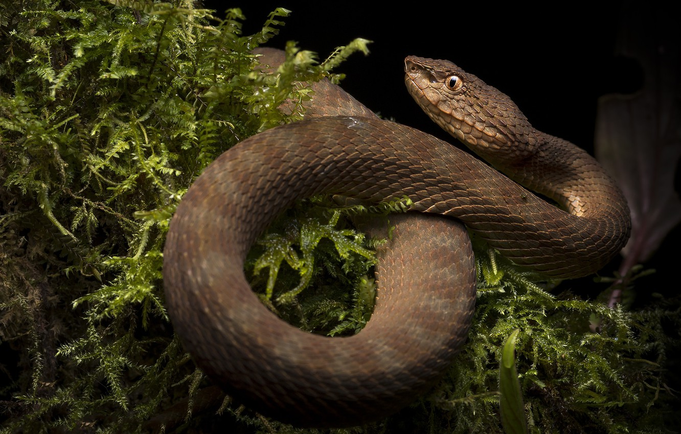 Photo wallpaper nature, snake, reptile, cold-blooded animal