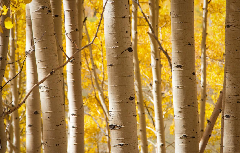 Photo wallpaper autumn, trees, grove