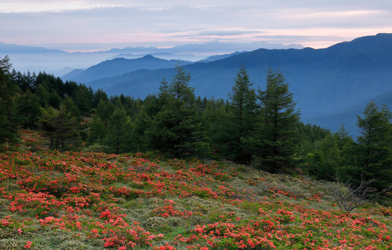 Photo wallpaper forest, the sky, grass, trees, flowers, mountains, dawn, glade