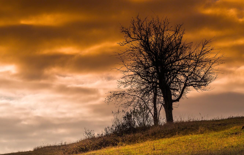 Photo wallpaper the sky, nature, tree