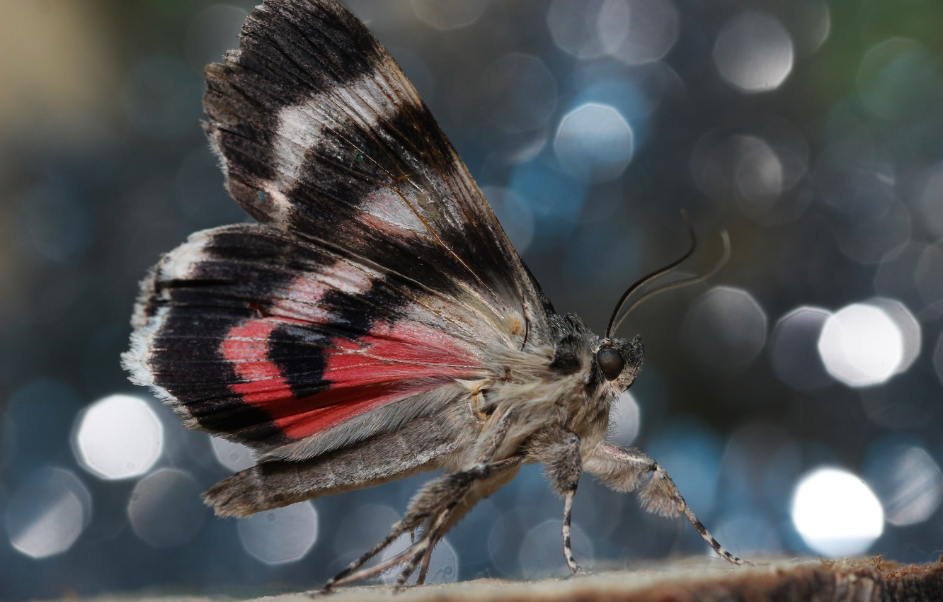Photo wallpaper background, butterfly, wings
