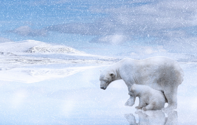 Photo wallpaper winter, snow, reflection, rendering, hills, shore, baby, bear, pair, bear, white, light background, Blizzard, snowfall, …