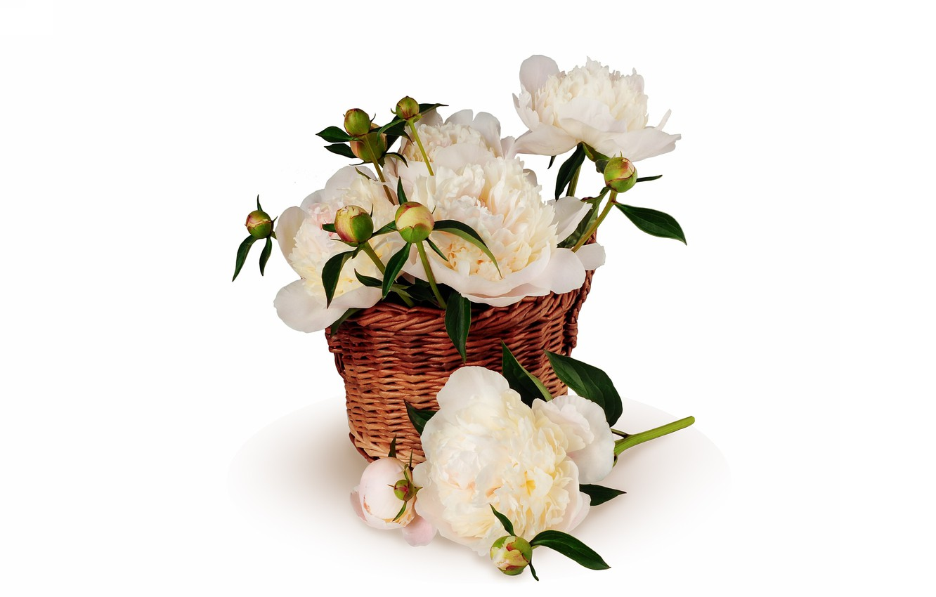 Photo wallpaper background, basket, peonies