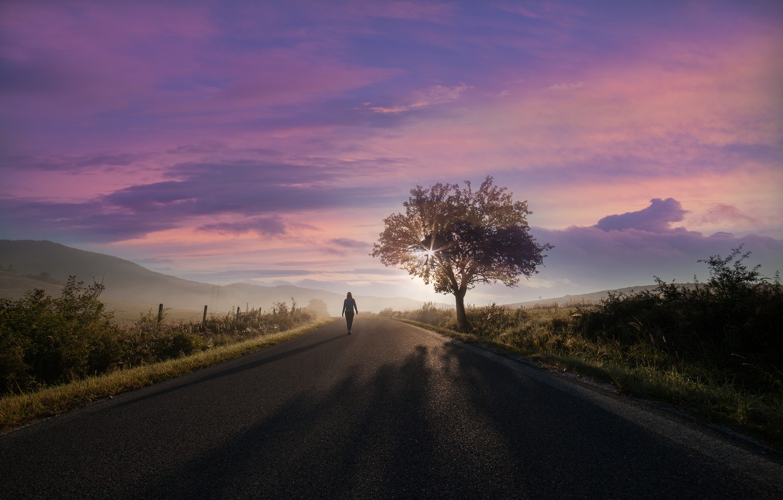 Photo wallpaper road, rays, tree, The sun, road, tree, rays, sun, Martin Marcisovsky