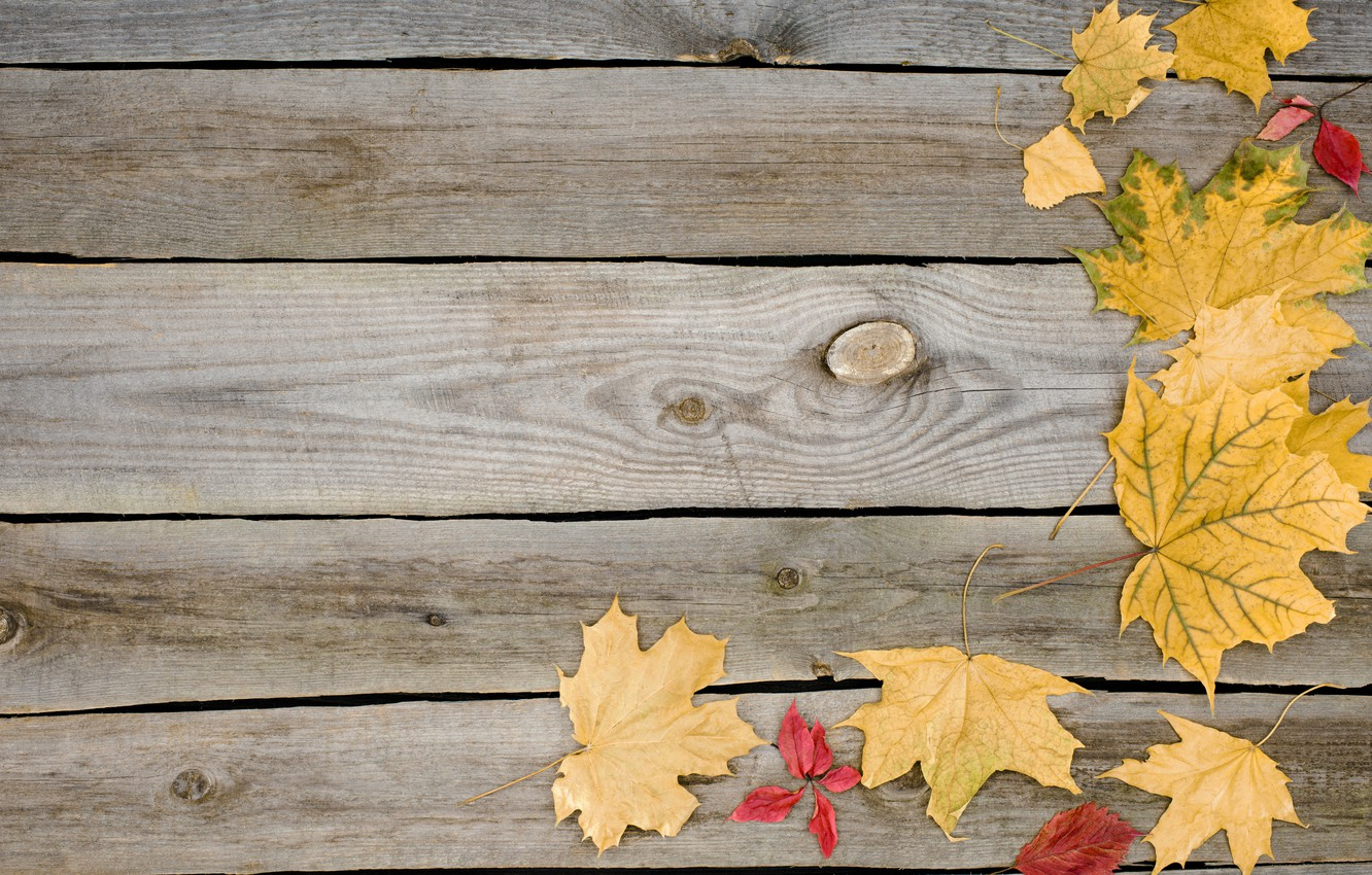 Photo wallpaper autumn, leaves, background, tree, Board, wood, background, autumn, leaves, autumn, maple