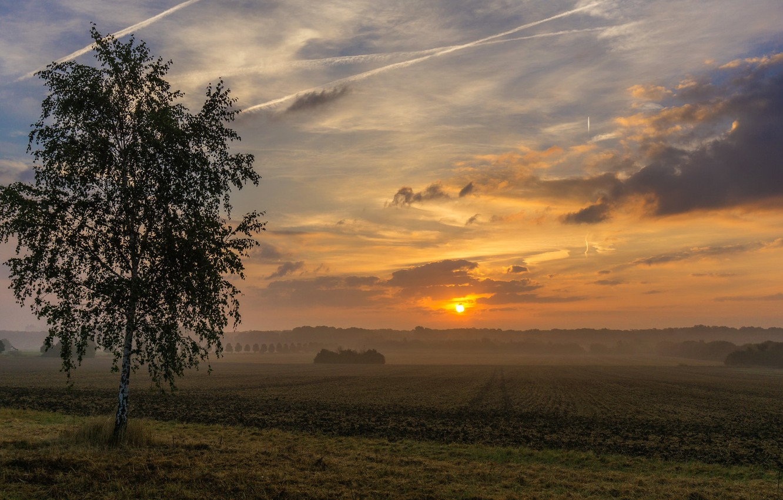 Photo wallpaper field, sunset, birch