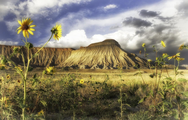 Photo wallpaper sunflowers, landscape, flowers, nature, mountain, beauty