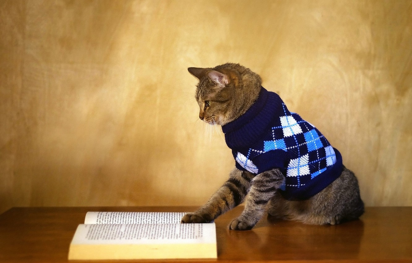 Photo wallpaper autumn, cat, heat, table, grey, wall, book, jacket, striped, sweater, 1 Sep, reading, scientist, knowledge, …