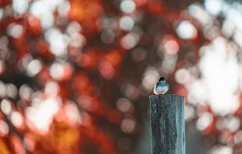 Photo wallpaper nature, bird, the fence