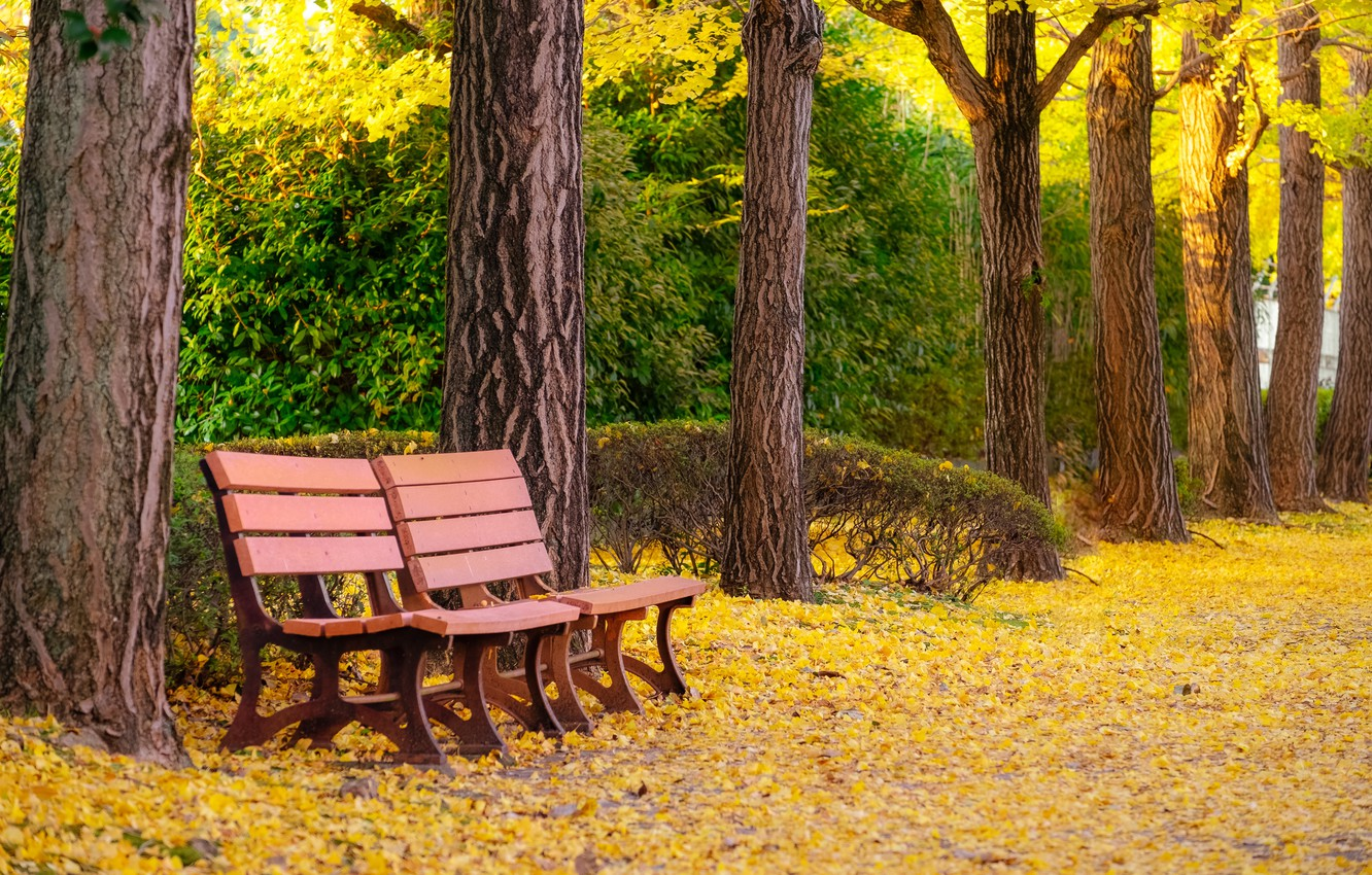 Photo wallpaper autumn, leaves, trees, bench, Park, park, autumn, leaves, tree, bench, fall