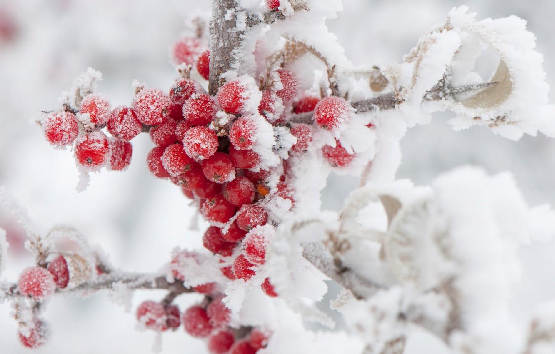 Photo wallpaper winter, frost, snow, berries, Rowan