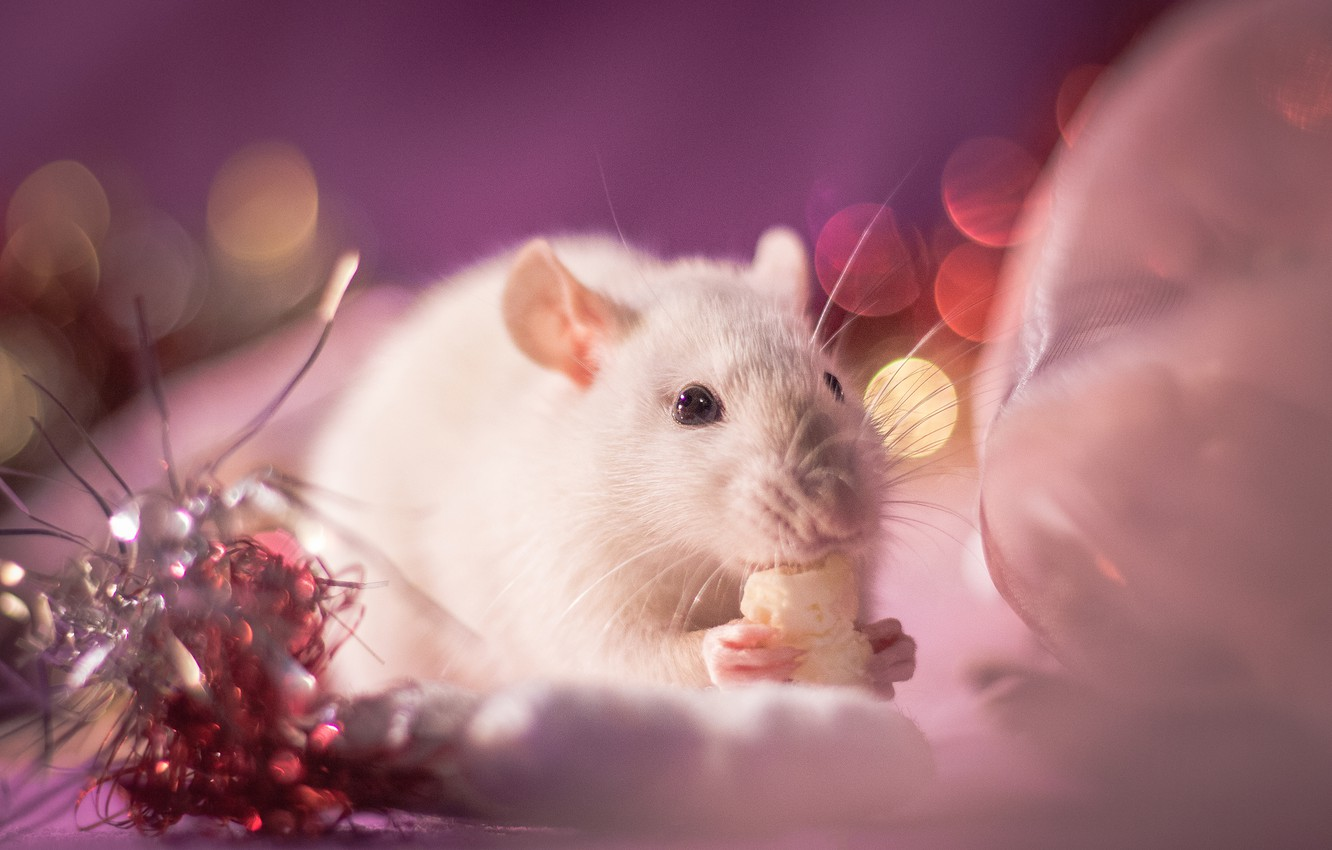 Photo wallpaper look, light, decoration, background, pink, holiday, eyes, legs, blur, mouse, mouse, muzzle, New year, white, …