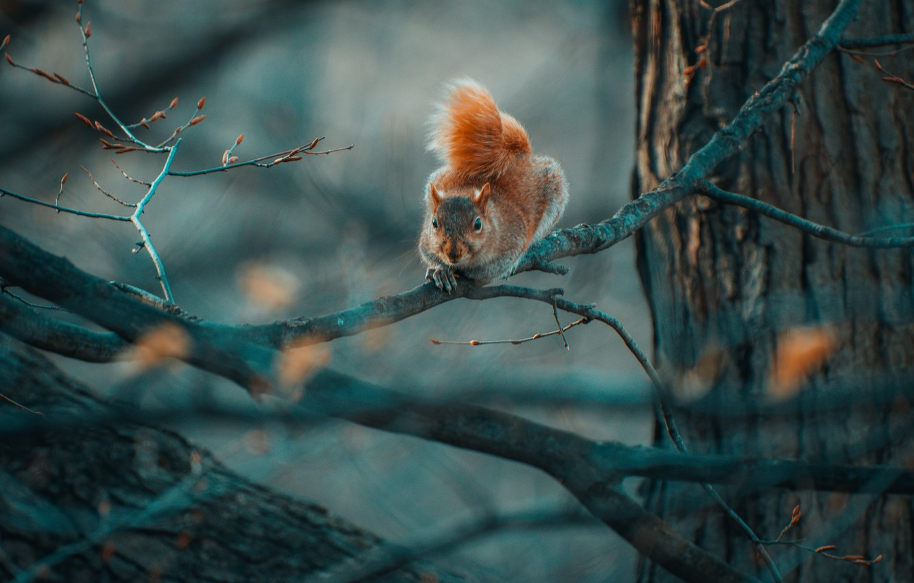 Photo wallpaper branches, nature, tree, protein, rodent
