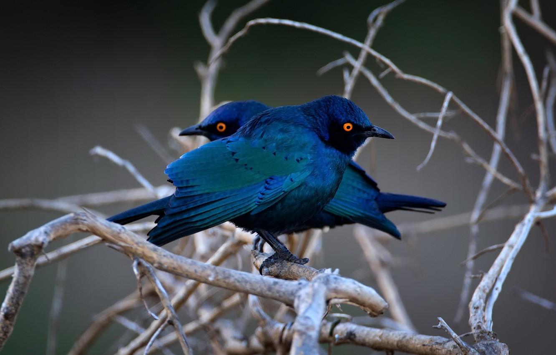 Photo wallpaper birds, nature, tree