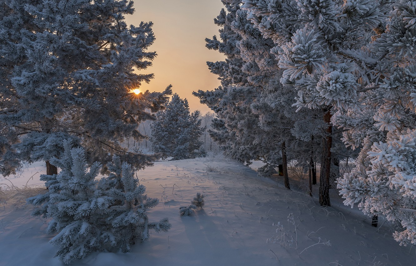 Photo wallpaper winter, the sun, rays, snow, trees, nature, dawn, morning, pine, Alexander Makeev