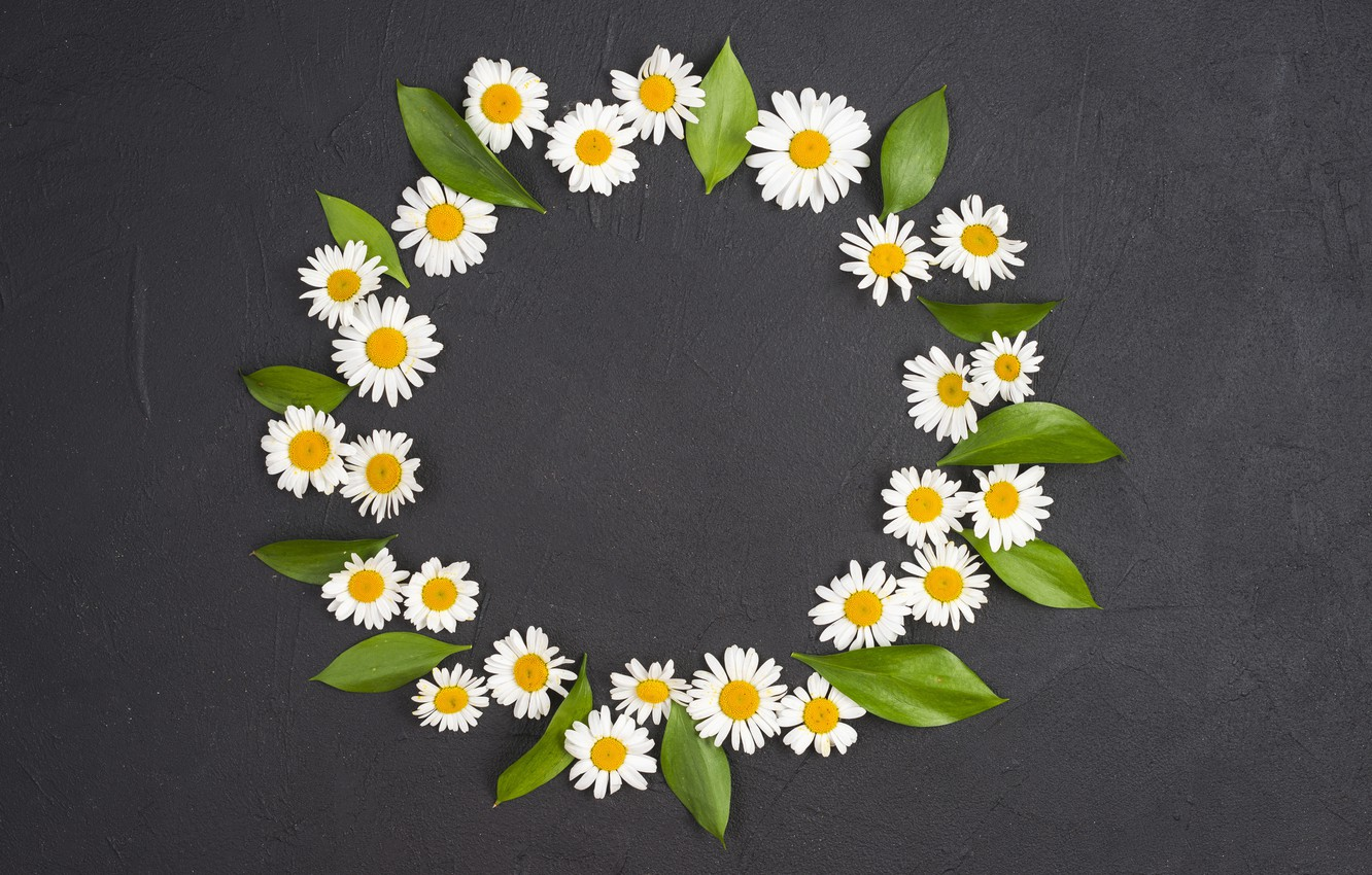 Photo wallpaper leaves, flowers, chamomile, round, black background, flowers, camomile