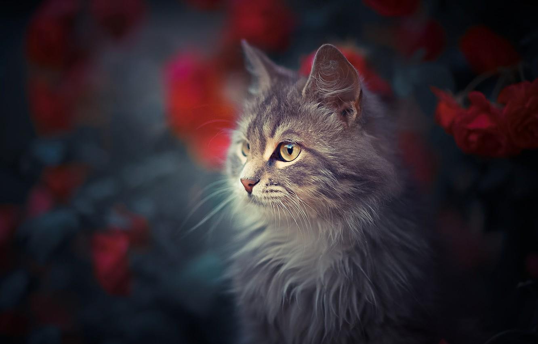 Photo wallpaper cat, cat, flowers, portrait, muzzle, bokeh, cat