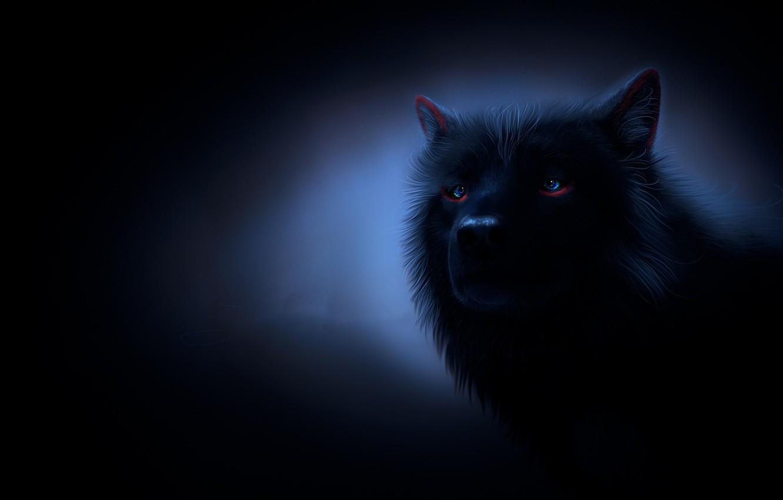 Photo wallpaper look, night, wolf