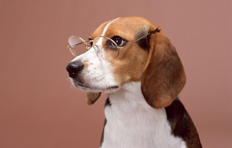 Photo wallpaper dog, glasses, dog, posing