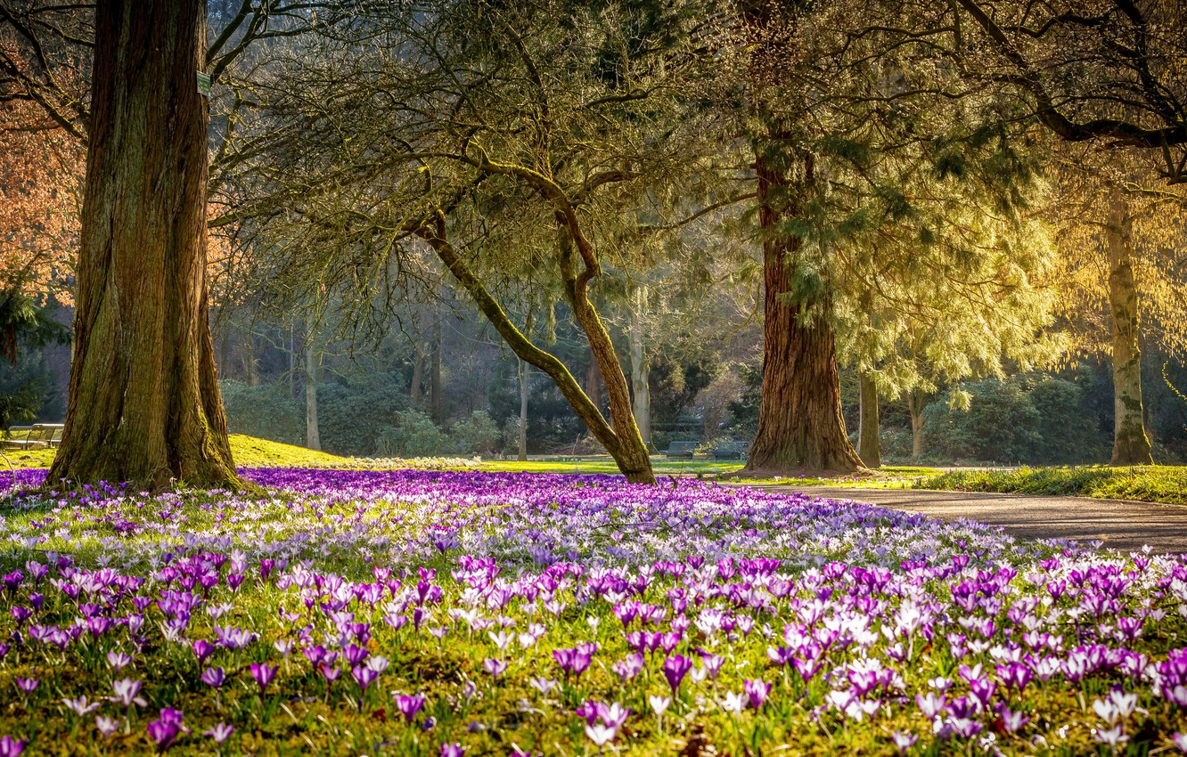 Photo wallpaper flowers, Park, spring