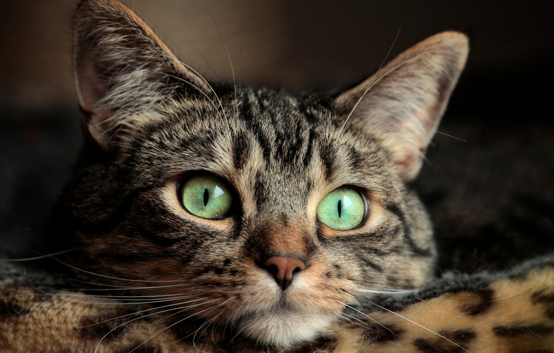Photo wallpaper eyes, cat, mustache, eyes, cat, mustache