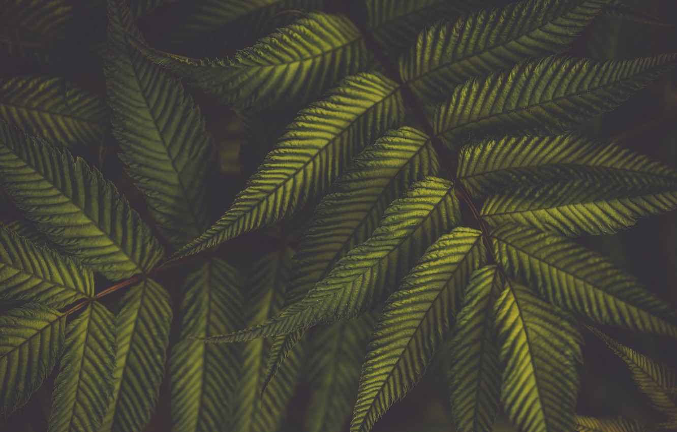 Photo wallpaper leaves, green, plant