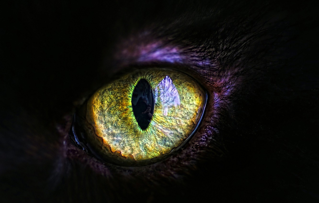 Photo wallpaper cat, eyes, the pupil