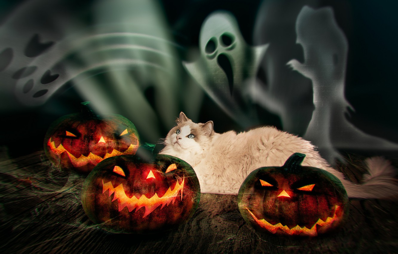 Photo wallpaper autumn, cat, cat, look, the dark background, fear, fire, holiday, Board, photoshop, pumpkin, lies, ghosts, …