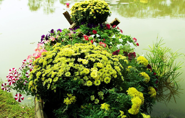 Photo wallpaper lake, Park, flowerbed, chrysanthemum