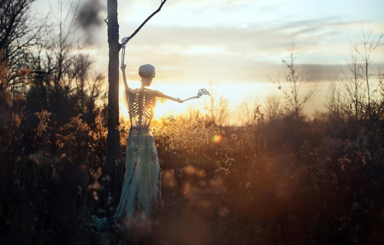 Photo wallpaper sunset, nature, skeleton