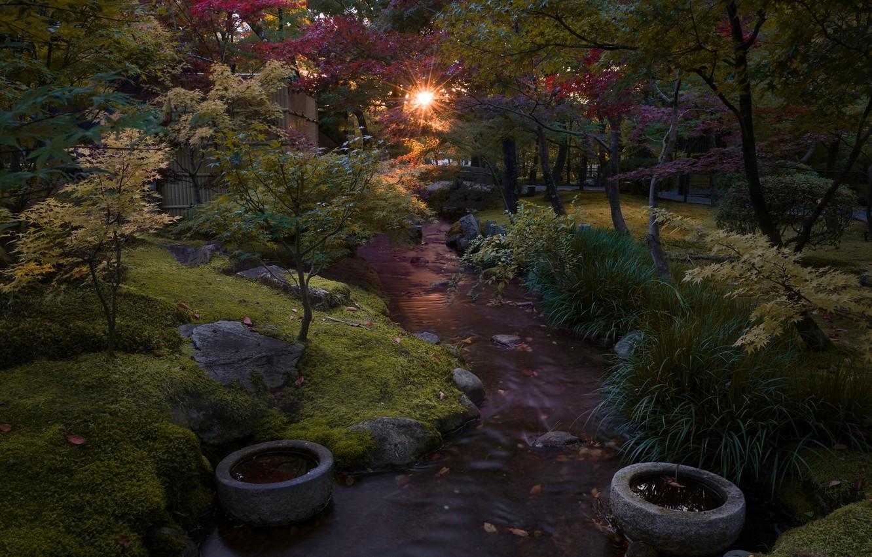 Photo wallpaper Park, stream, morning, Japan, Kyoto, Leonardo Rodriguez