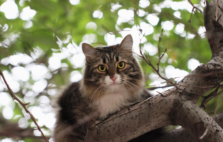 Photo wallpaper cat, background, tree, bokeh