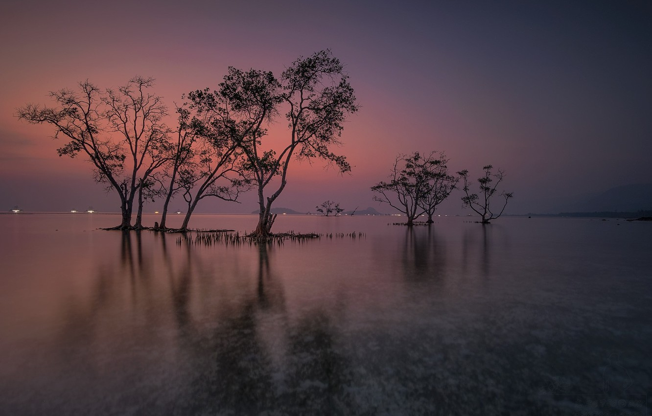 Photo wallpaper water, trees, landscape, nature, beauty, the evening, space