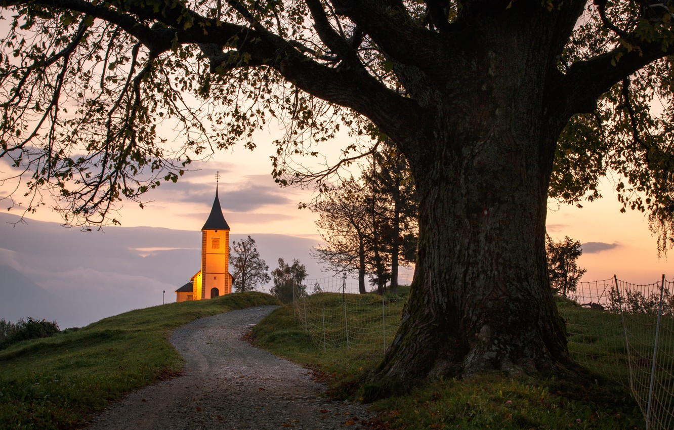 Photo wallpaper road, landscape, nature, tree, morning, backlight, Church, meadows, Slovenia, Yamnik