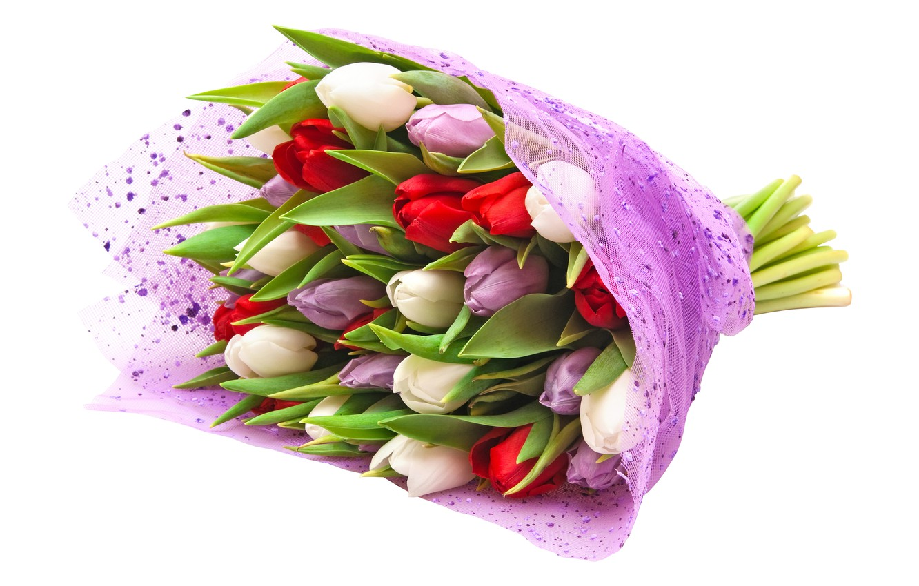 Photo wallpaper bouquet, purple, tulips, red, white background, white