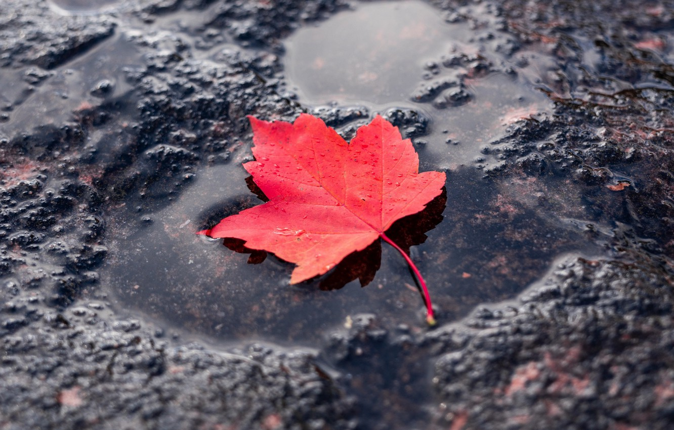 Photo wallpaper red, sheet, puddle, red, leaf, puddle