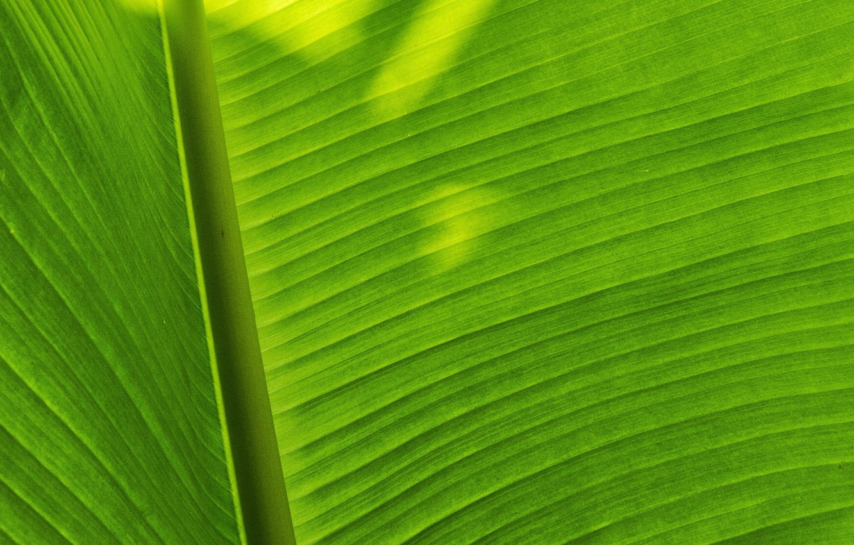 Photo wallpaper macro, sheet, shadow, green