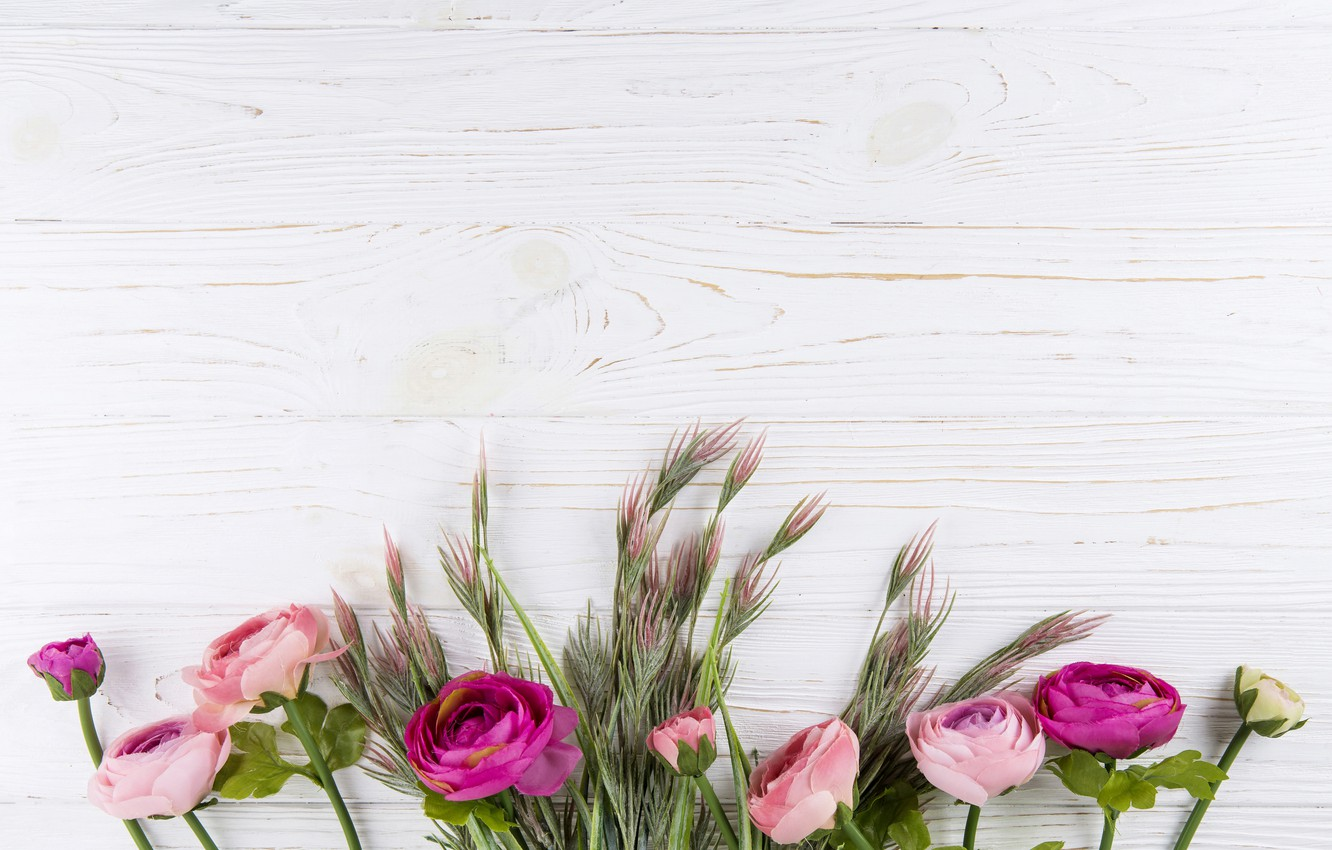 Photo wallpaper flowers, background, Board, roses, congratulations, postcard, blank