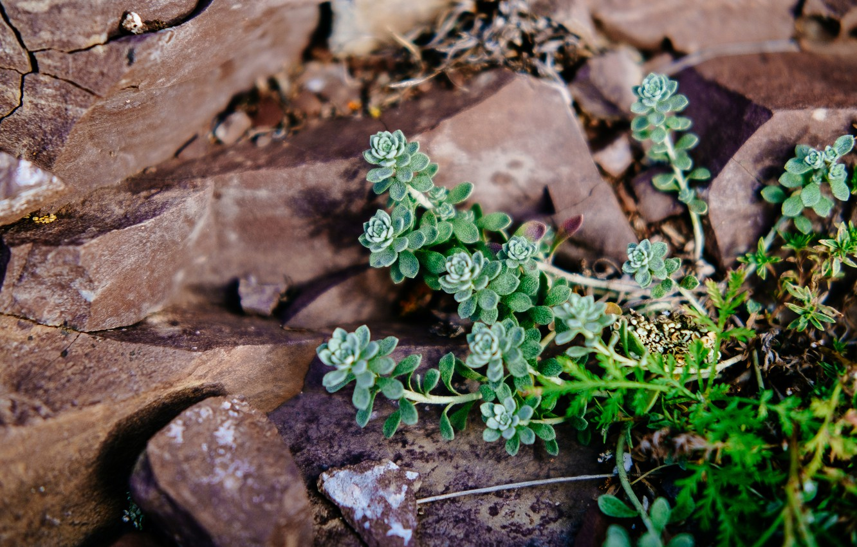 Photo wallpaper autumn, nature, stones, plant, Khakassia, succulents, sulakskaya Pisanitsa