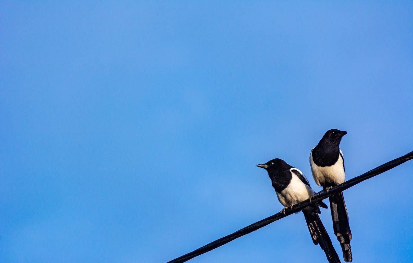 Photo wallpaper the sky, birds, wire, magpies