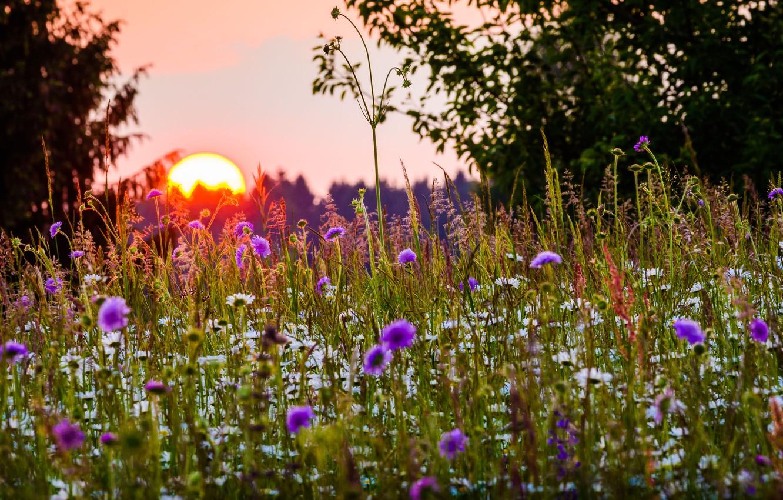 Photo wallpaper summer, grass, the sun, trees, sunset, flowers, nature, Bayern