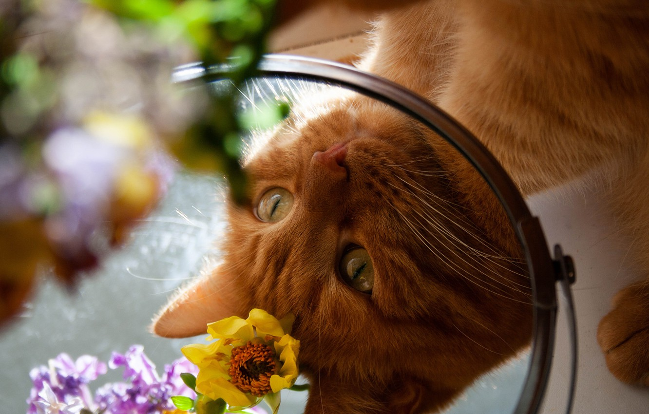 Photo wallpaper cat, eyes, cat, look, face, flowers, reflection, portrait, paws, mirror, red, bokeh, looks in the …