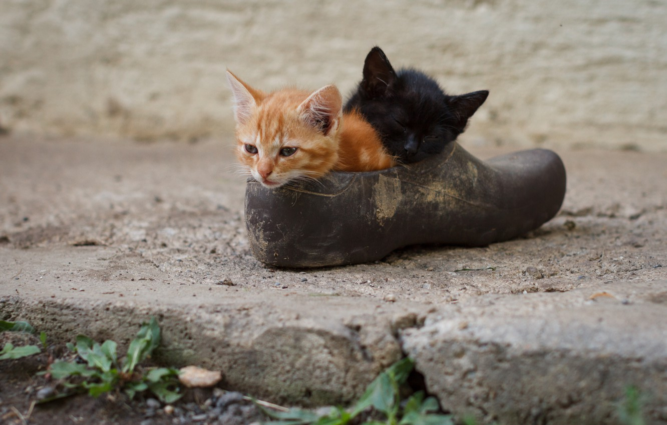 Photo wallpaper kittens, kids, a couple, shoes, two kittens