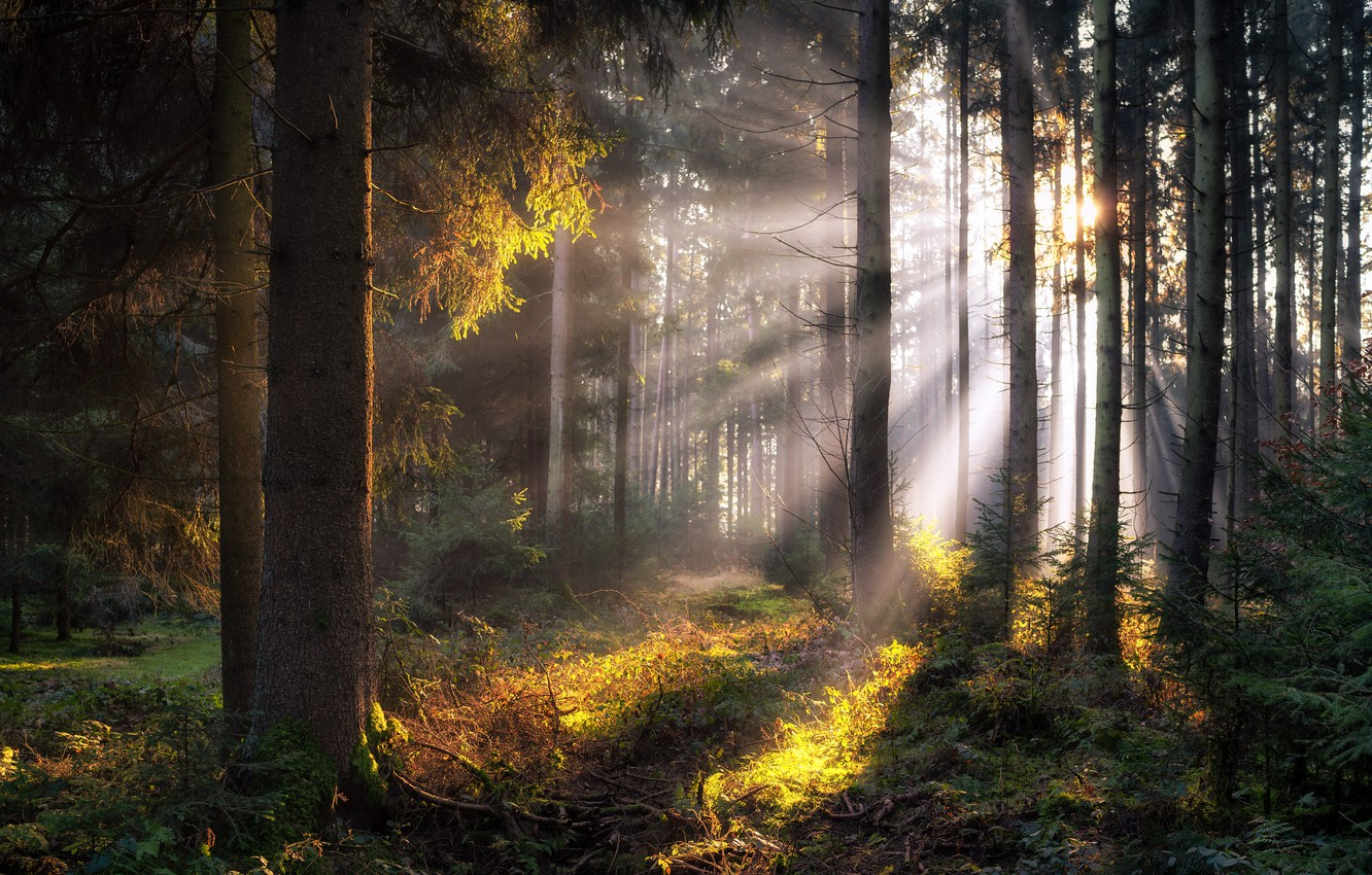Photo wallpaper forest, nature, morning