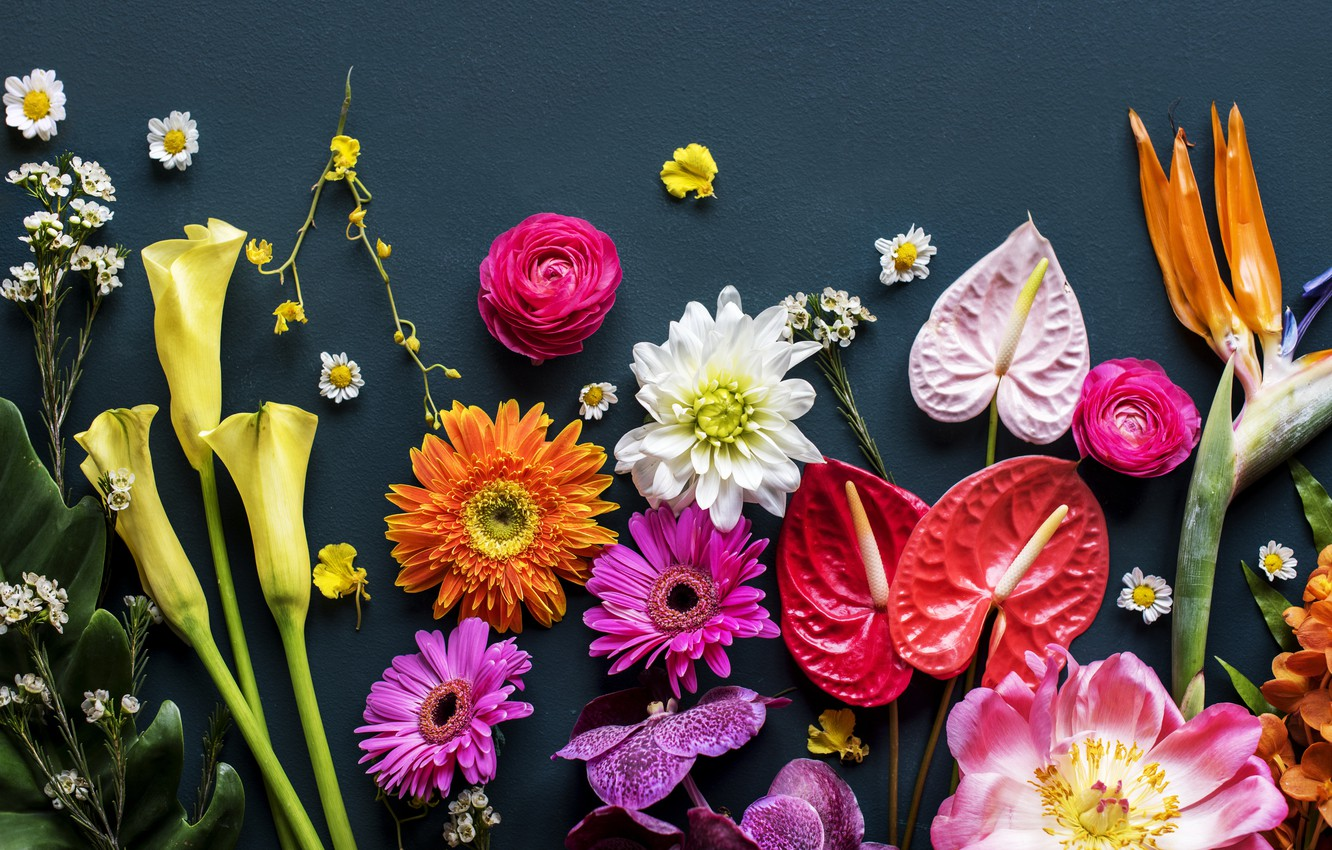 Photo wallpaper flowers, background, colorful, flowers, bright, various