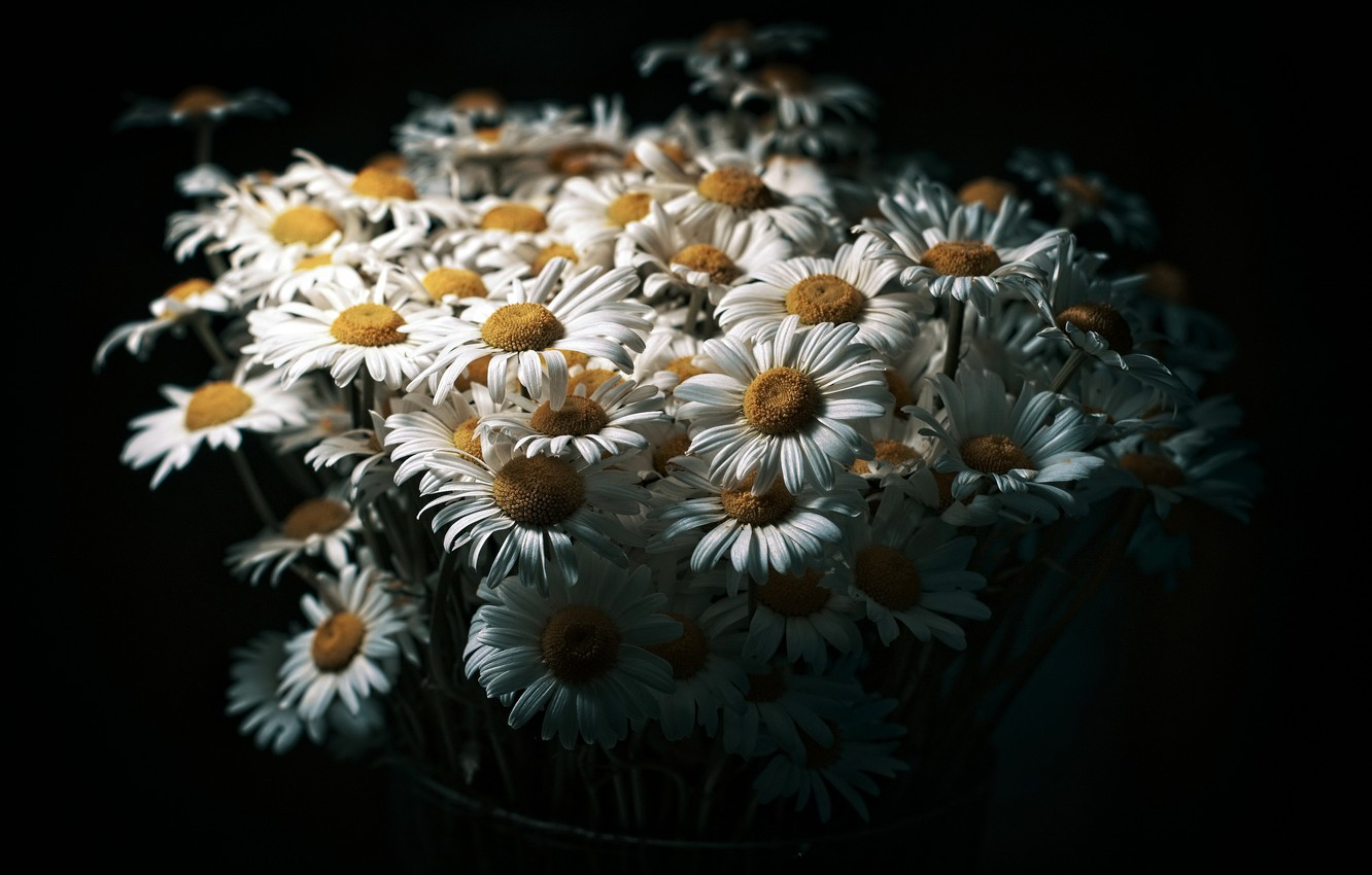 Photo wallpaper flowers, background, chamomile