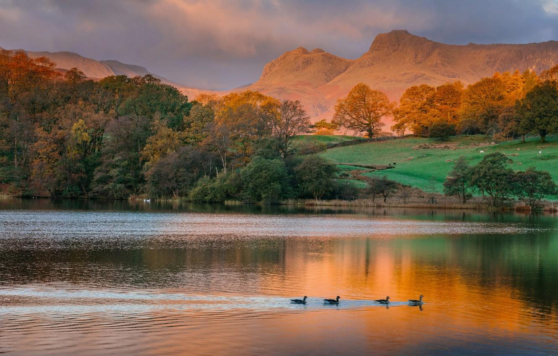 Photo wallpaper autumn, trees, landscape, mountains, birds, nature, lake, shore, duck