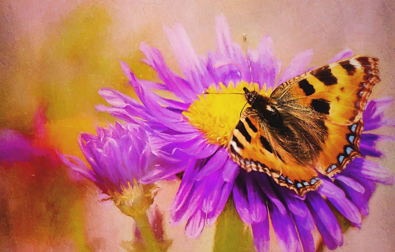 Photo wallpaper flower, butterfly, treatment, art, painting, photoart