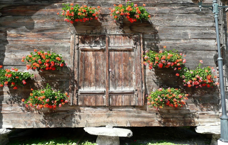 Photo wallpaper flowers, interior, decor